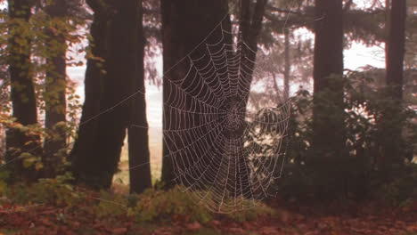 A-spider-weaves-its-web-in-golden-morning-light