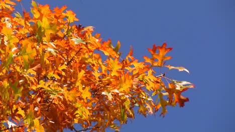 Vivid-autumn-colors-light-up-the-trees