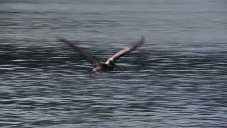 Ein-Pelikan-Fliegt-In-Zeitlupe-über-Den-Ozean