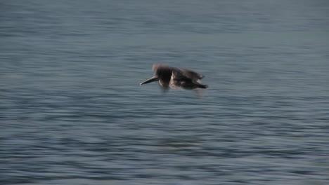 Ein-Pelikan-Fliegt-In-Zeitlupe-über-Den-Ozean-1