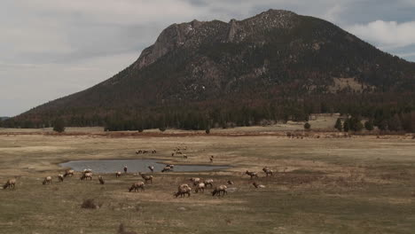 Elk-grazing-in-a-field-in-the-distance-in-Yellowstone-National-Park