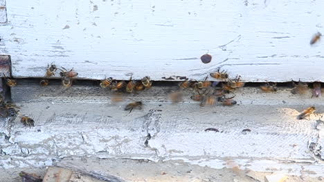 Bees-are-swarming-around-a-piece-of-wood