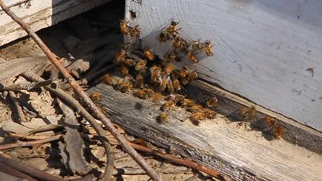 Bees-swarm-around-wood