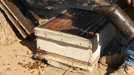 Beekeeper-fumigates-a-beehive