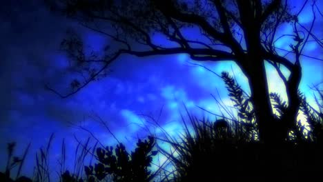Time-lapse-of-clouds-passing-over-a-tree-silhouette-