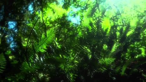 Eine-Brise-Bewegt-Pflanzen-über-Den-Waldboden