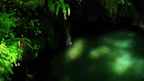 Sonnenlicht-Filtert-Durch-Den-Wald-In-Einen-Ruhigen-Bach