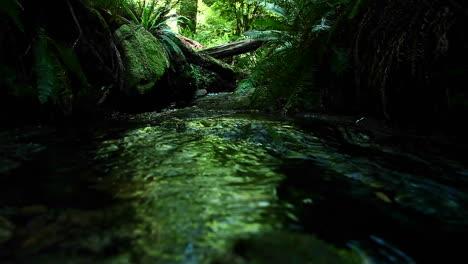 Ein-Bach-Fließt-Durch-Einen-Wald-9