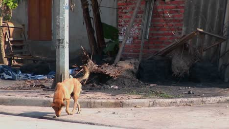 A-stray-dog-wanders-in-the-street-in-a-small-village-in-China