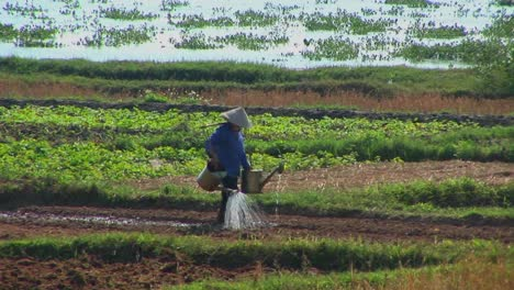 A-Vietnamese-farmer-waters-fields-using-traditional-methods