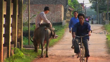A-man-sits-on-a-water-buffalo-and-watches-people-pass-in-a-rural-village-in-Vietnam