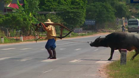 A-man-leads-his-water-buffalo-past-a-crowded-highway-in-Vietnam