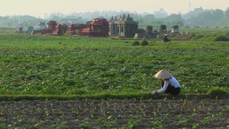 A-woman-works-in-the-fields-with-some-graves-in-the-background