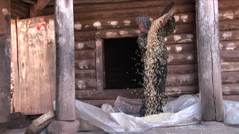 A-peasant-woman-threshes-and-pours-rice-on-a-farm-in-China
