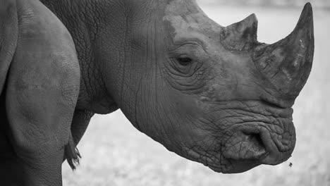 Rhino-07