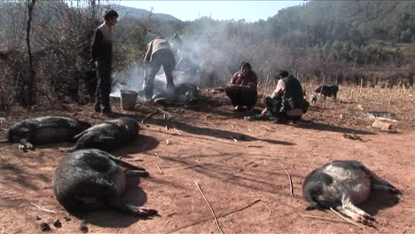 Pigs-are-slaughtered-and-prepared-for-dinner-in-rural-China