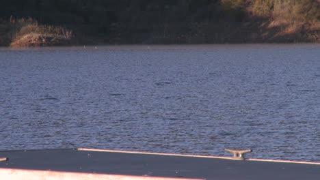 Great-Blue-Heron-(Ardea-herodias)-flying-at-Lake-Casitas-Recreation-Area-in-Oak-View-California