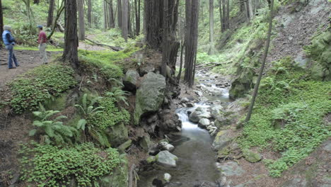 Time-lapse-of-people-walking-in-the-forest-at-Limekiln-State-Park-in-Big-Sur-California