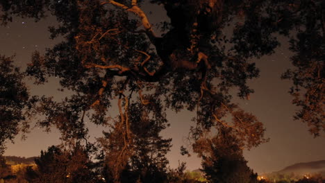 Time-lapse-of-star-trails-and-oak-tree-in-Oak-View-California