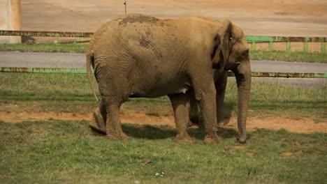 Elephant-in-Zoo-106