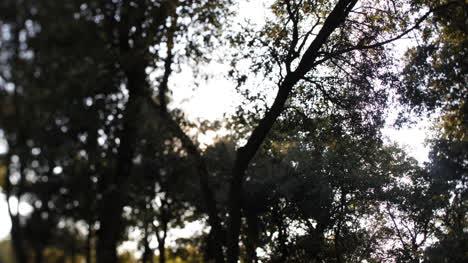 Sunlight-Branches-00