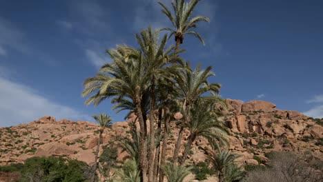 Tafroute-Palms-07
