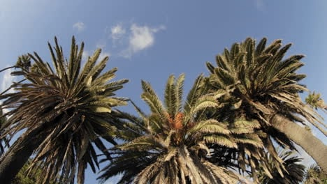 Time-lapse-of-clouds-passing-over-a-palm-tree-on-Refugio-Beach-State-Park-California