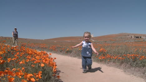 Front-point-of-view-of-child-running-through-the-california-poppies-in-bloom-in-the-Antelope-Valley-Poppy-Preserve-California