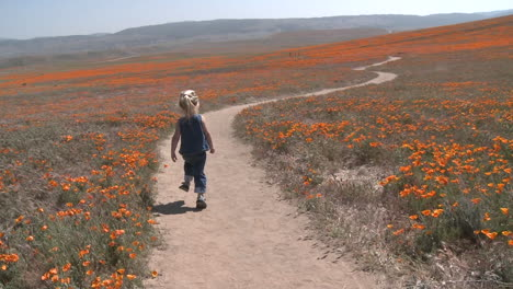 Rear-point-of-view-of-child-running-through-the-california-poppies-in-bloom-in-the-Antelope-Valley-Poppy-Preserve-California
