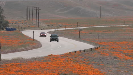 Road-through-california-poppies-in-bloom-entering-the-Antelope-Valley-Poppy-Preserve-California