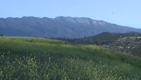 Meadow-and-the-Topa-Topa-montaña-in-Ojai-California
