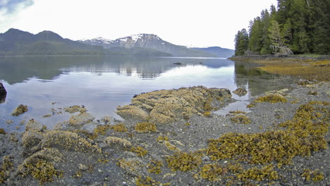 Fast-time-lapse-with-motion-of-the-tide-retreating-on-Pond-Island-next-to-Kelp-Bay-off-of-Baranof-Island-in-Southeast-Alaska