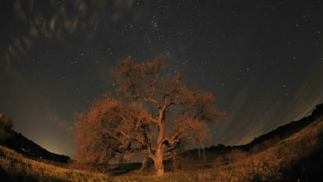 Night-time-lapse-of-star-trails-clouds-and-Valley-Oak-Tree-during-a-new-moon-in-Oak-View-California