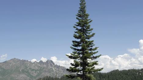 Lapso-De-Tiempo-De-Las-Nubes-De-Tormenta-Que-Se-Forman-Sobre-Sierra-Butte-En-El-Bosque-Nacional-Tahoe-California