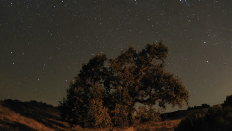 Night-time-lapse-motion-of-star-trails-and-Valley-Oak-Tree-during-a-new-moon-in-Oak-View-California