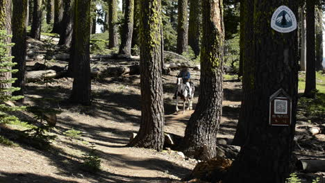 A-man-riding-his-horse-on-the-Pacific-Crest-Trail-near-Packer-Lake-Saddle-at-the-Sierra-Buttes-in-Tahoe-National-Forest-California-1
