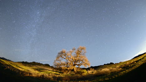 Night-Time-lapse-of-star-trails-and-clouds-over-a-valley-oak-tree-near-Ojai-California