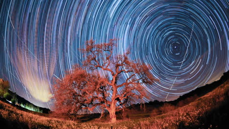 Time-lapse-star-trail-streaks-over-a-valley-oak-tree-near-Ojai-California