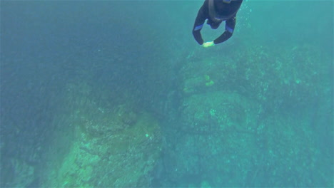 Freitauchen-Durch-Eine-Schule-Von-Schwarz-Gestreiften-Salema-Fischen-Bei-Punta-Vicente-Roca-Auf-Der-Insel-Isabela-Im-Galapagos-Nationalpark-Ecuador