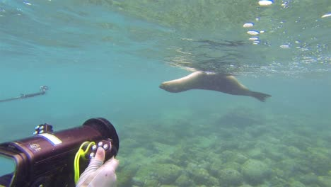 Free-divers-filming-a-Galapagos-Sea-Lion-underwater-at-Champion-Island-off-Floreana-Island-Island-in-Galapagos-National-Park-Ecuador