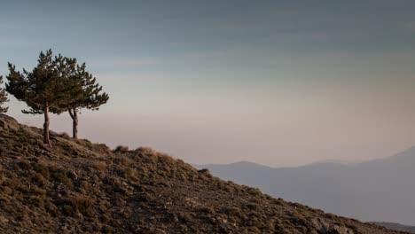 Alpujarras-Trees0