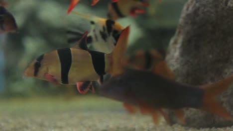 Aquarium-28