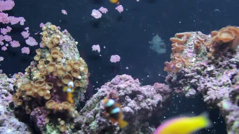 Aquarium-36