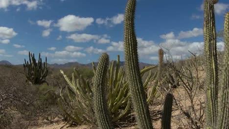 Baja-Desert-05
