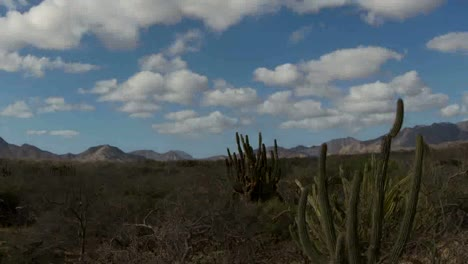Baja-Desert-06