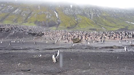 Slow-panning-of-Chinstrap-penguin-rookery-at-Baily-Head-on-Deception-Island-in-Antarctica-