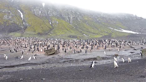 Pan-right-to-left-of-Chinstrap-penguin-rookery-at-Baily-Head-on-Deception-Island-in-Antarctica-