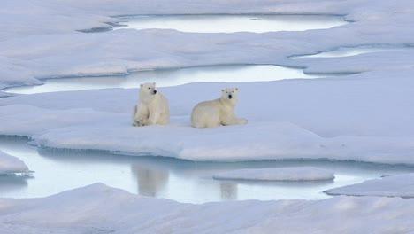 Two-polar-bear-cubs-sleeping-on-the-sea-ice-off-Baffin-Island-in-Nunavut-Canada
