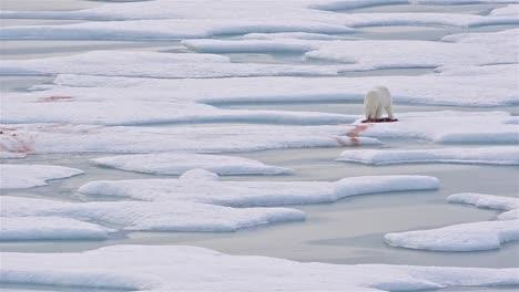 Oso-Polar-En-El-Hielo-Marino-Con-Una-Foca-Matar-En-Norwegian-Bay-En-La-Península-De-Bjorne-En-La-Isla-De-Ellesmere-En-Nunavut-Canadá