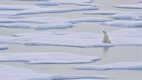 Großer-Eisbär-Sitzt-Auf-Meereis-Und-Spiegelt-Sich-In-Einem-Teich-In-Der-Norwegischen-Bucht-Auf-Der-Halbinsel-Bjorne